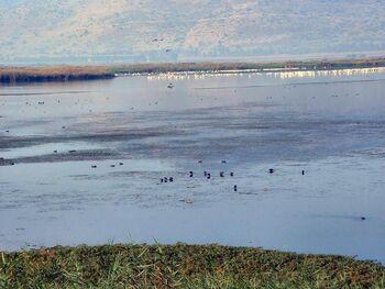 Migrating Birds at the Hula Wetlands6
