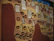 Museo Sant'Antioco 001
