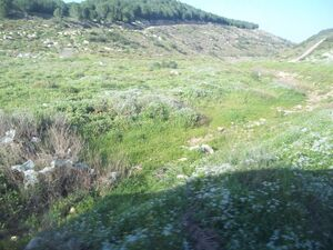 The source of Hedera river 2