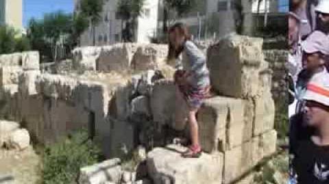 'עמיתים לטיולים' - ביקור באלוני ממרא, צילמה ציפי שליסל