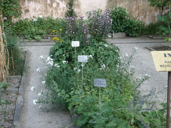 צמחי רפואה 1