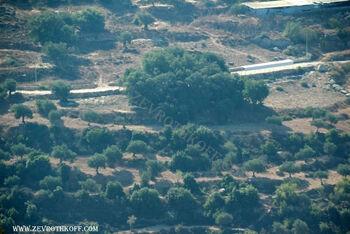 אלון גדול ובית קברות קטן בעין קיניה