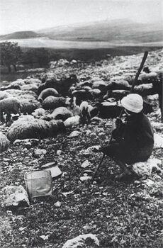 מטולה - נער רועה.-JNF028600