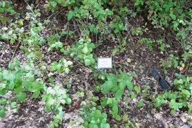 Botanic garden 7 petel kadosh