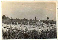 Jews brigade tomb ravenna 1945A