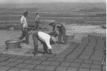 MEMBERS OF KIBBUTZ TIRAT ZVI CONSTRUCTING NEW HOUSES. חברי קיבוץ טירת צבי בונים בתים חדשים.