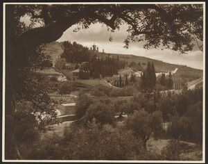 Mount of Olives, Jerusalem, showing olive and cedar trees, the Basilica of Gethsemane, and Russian Othodox Church of the Magdalene in the distance