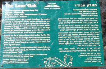 The lone oak explanation