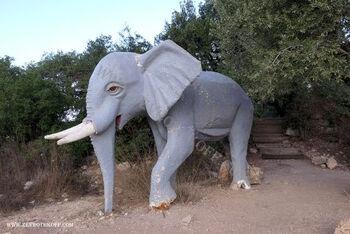 פיל אפריקאי בגבעת היקבים