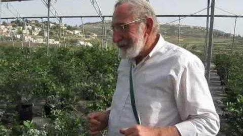 Blueberry in Israel גידול אוכמניות בשומרון 2010.wmv