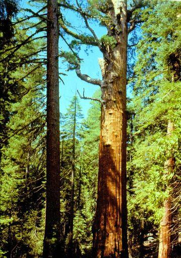 Sequoia National Park 01