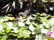 Orto botanico di Napoli 04