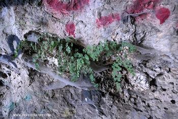 שרך במערת הדרקון בואדי אל קוליה