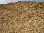 Ammonite-wall1