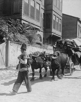 Buffalo cart in Istanbul, 1900s