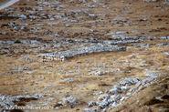 קובר בני ישראל רוטקף 12