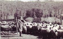 PikiWiki Israel 13576 Animal Industries at Kibbutz Ramat Yohanan