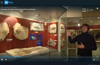 Museo dei Fossili di Bolca - Verona 3