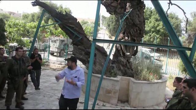 ביקור_באשל_אברהם_בחברון_עם_נועם_ארנון