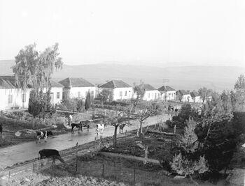 METULA. מראה כללי של היישוב מטולה בגליל.D583-106