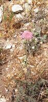 Kida flower c