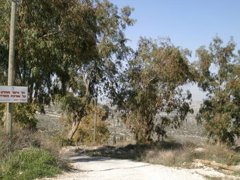 Eucalyptus grove givat rhashi kedumim 01