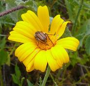 Beetle001