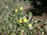 פרחי קדומים 019