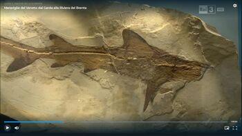 Museo dei Fossili di Bolca - Verona 4