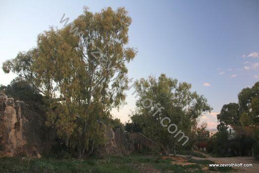 שביל רכס הכורוכר עתלית