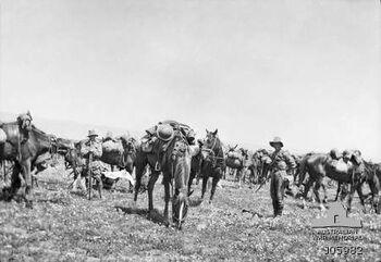4th Light Horse Regiment Egypt
