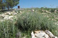 Maon panorama1