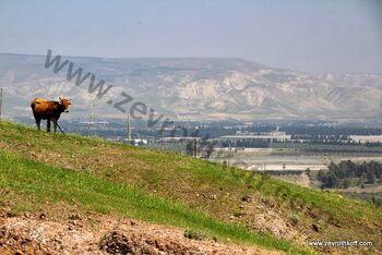 Jordan valley 56