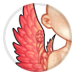 899-honourable-wings.png