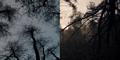 DARK 1x05 0001–SplitScreen trees.png
