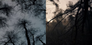 DARK 1x05 0001–SplitScreen trees