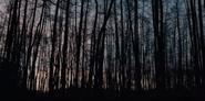 DARK 1x01 Trees Silhouette