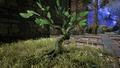 Gurdian Tree 2.png