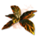 Icon cooking herb.png
