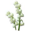 Icon lightblossoms.png