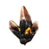 Icon magic shards.png