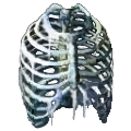Icon bytorg spine.png