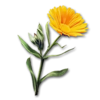 Icon terra flower.png
