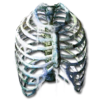 Icon bytorgs spine.png