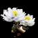Icon snow lotus.png