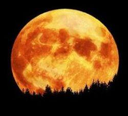 Bad moon-01.jpg
