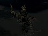Curse (Dark Souls)