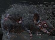Гигантская крыса (Dark Souls III)