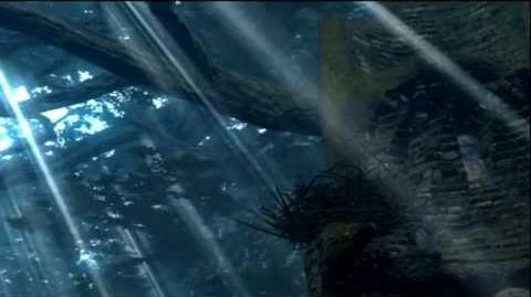 Asylum Crow