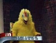 Amanda fear of chickens